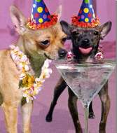 The posted image b-day-card-chi-martinis_thumb1.jpg