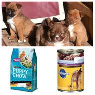 The posted image Puppy Food.jpg